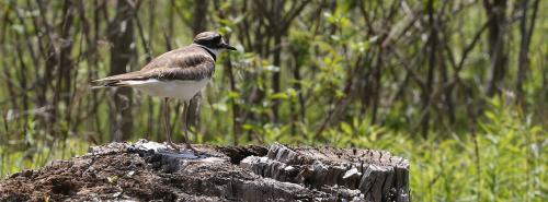 Bird Photo from TRCA